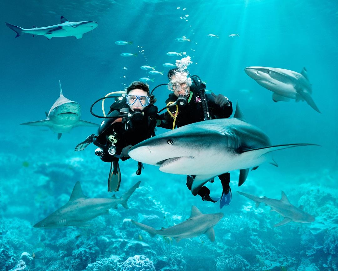 与鲨同游-圣淘沙海洋馆和水上探险乐园潜水