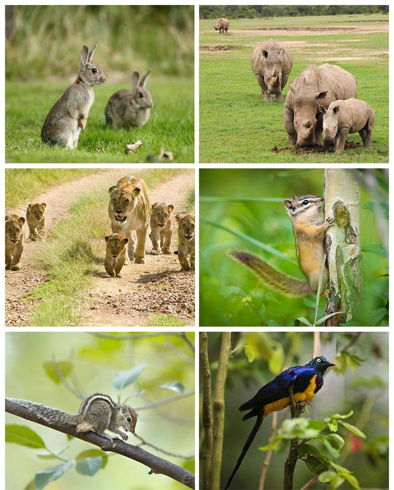 19227富国岛野生动物园16