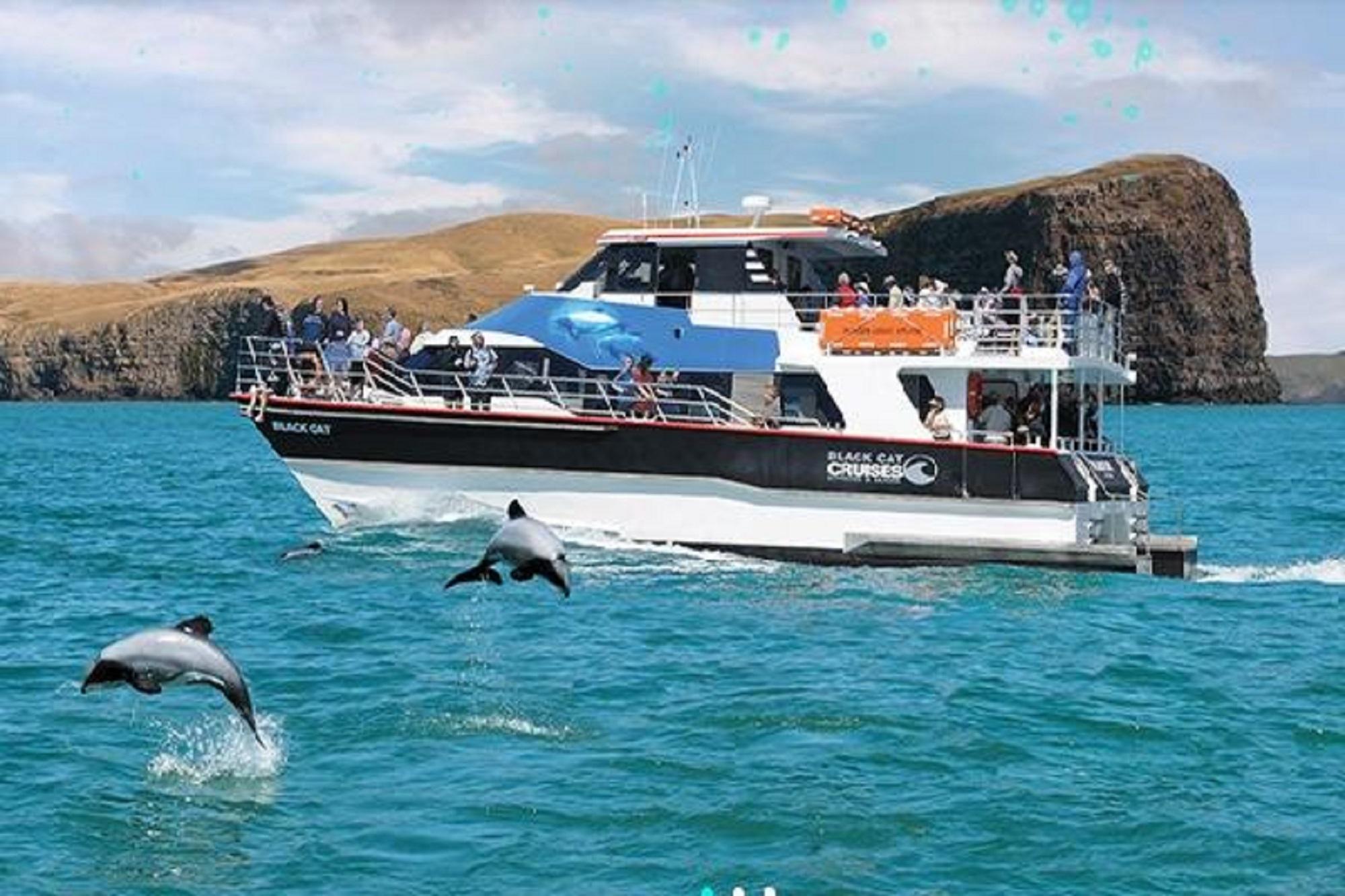 新西蘭基督城 阿卡羅阿黑貓遊船出海觀海豚(可選與海豚共泳)