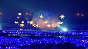 武汉花世界灯光节08