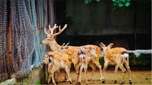 北方森林动物园门票_九峰森林动物园门票,九峰森林动物园门票价格,九峰森林动物园