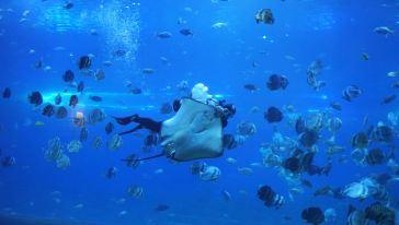 汉海海洋世界 (25) - 副本