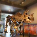 洛杉磯自然歷史博物館門票