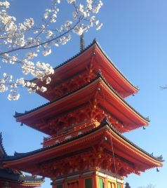 名古屋游记图文-等待最好的时光去看你-樱花季日本之旅