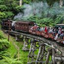 Puffing Billy Ticket