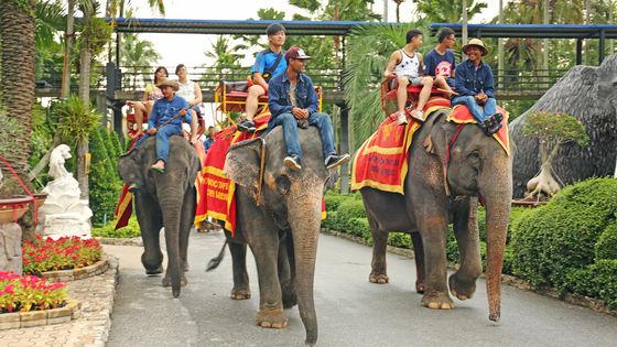 東芭樂園門票(免打印 可選騎大象/大象表演)