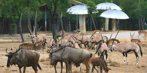 曼谷野生動物世界