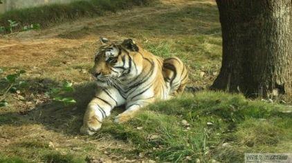 长沙生态动物园4