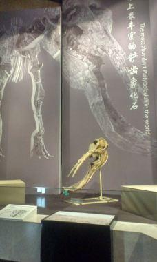 古动物化石博物馆-临夏-金蜘蛛