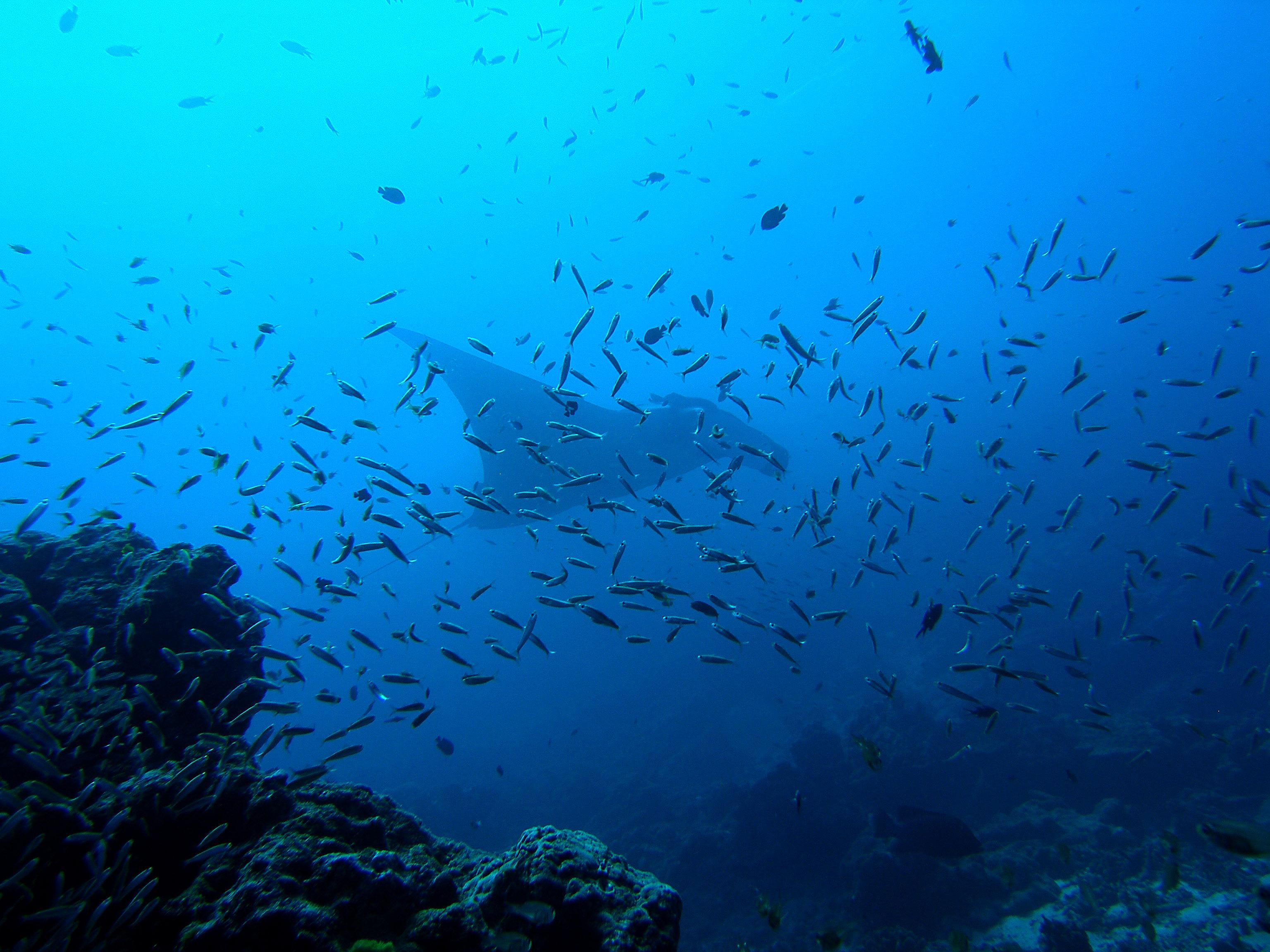 斯米蘭群島  Similan Islands   -2