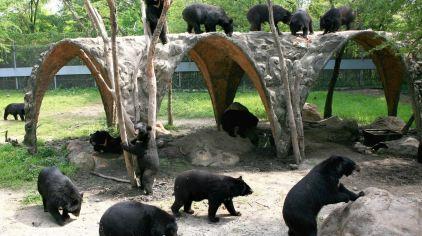 曼谷 野生动物世界 (2)