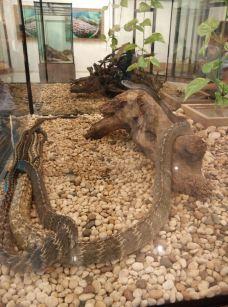 毒蛇研究中心-普吉岛-菜姑娘