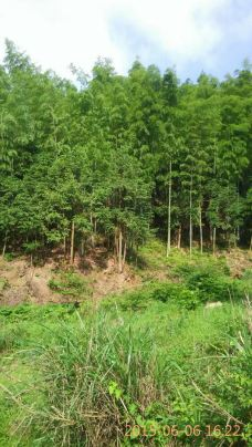 翠微峰国家森林公园-宁都-清爽