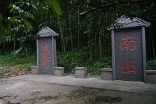 南山-镇江-蓝色的郁金香88