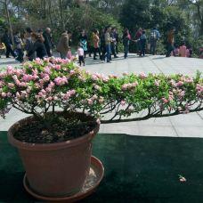 南山植物园-重庆-_WB****3335