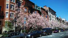 纽伯里街-波士顿-Calvin在路上