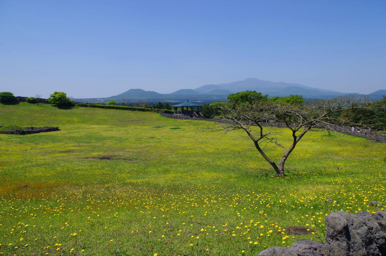 小野容.`�.�_黄色的小野花儿像繁星洒落在草地上