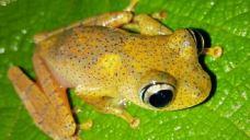 昂达西贝国家森林保护区