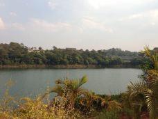梅子湖公园-普洱-迷恋DAISY