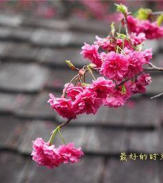 彰化游记图文-台湾,我前世的故乡