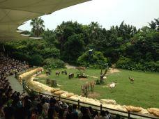 长隆野生动物世界-广州-yy