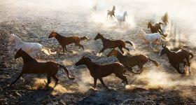【冬季冰雪特惠】新疆古生态园景区成人票