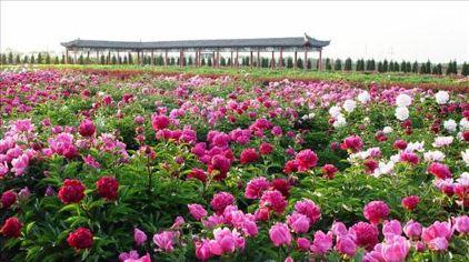 汉牡丹园1