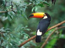 长嘴鸟-马来西亚-用户32983