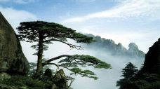 黄山风景区-黄山-跟着春天去旅行