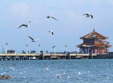 冬季漫天海鸥的栈桥-栈桥-青岛-用户3267533
