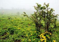 冶勒自然保护区-冕宁-半把刀