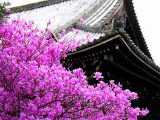 武汉大学-武汉-樱花客