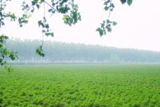 昆仑药用植物观光园-桃园市-白袍小将