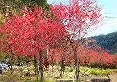 栖兰国家森林游乐区-宜兰-白袍小将