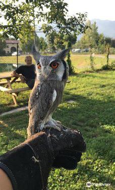 I Falconieri del Feudo-埃尔巴