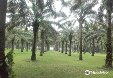 Jardin botanique de Bingerville-阿比让