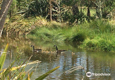 Ayrlies花园-曼努考市