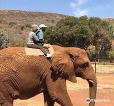 Elephant Sanctuary Hartbeesport Dam-哈特比斯普特