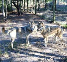Garden Route Wolf Sanctuary-Greater Plettenberg Bay